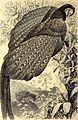 Brehms Tierleben - allgemeine Kunde des Tierreichs - mit 1800 Abbildungen im Text, 9 Karten und 180 Tafeln in Farbendruck und Holzschnitt (1891) (20414643685).jpg