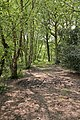 Bridleway along eastern edge of The Rough - geograph.org.uk - 803478.jpg