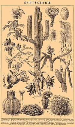 Brockhaus and Efron Encyclopedic Dictionary b26 960-0.jpg