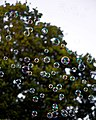 Bubble machine soap bubbles at Staplefield, West Sussex, England 01.jpg