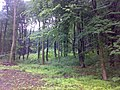 Bukový les - panoramio (1).jpg