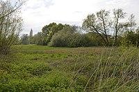 Bull Meadow 3.JPG