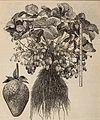 Burpee's farm annual, 1892 (1892) (20323424228).jpg