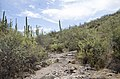 Butcher Jones Trail to Pinter's Point Loop, Tonto National Park, Saguaro Lake, Ft. McDowell, AZ - panoramio (169).jpg