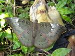 Butterfly 09.JPG