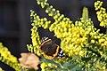 Butterfly on yellow flower, spring.jpg