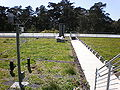 CA Academy of Sciences Living Roof 7.JPG