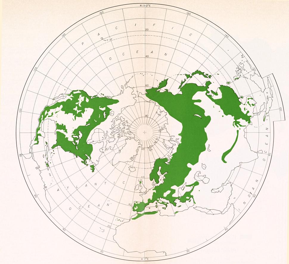 CL-01 Pinus world range map