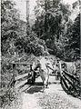 COLLECTIE TROPENMUSEUM Ossenkar op Bandar Baroe Sumatra's Oostkust TMnr 10013813.jpg