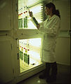 CSIRO ScienceImage 6691 photobioreactor.jpg
