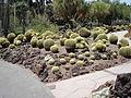 Cactus & Succulents (183443491).jpg