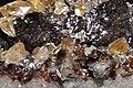 Calcite Elmwood sur sphalérite 4(USA).jpg