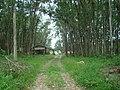 Camping Parque Curumim - panoramio - jkern (3).jpg