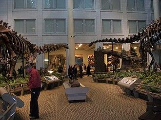 Carnegie Museum of Natural History - Image: Carnegiesaurus