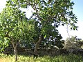 Castanheiro, 5140, Portugal - panoramio (66).jpg