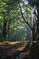 Castlehill Wood - geograph.org.uk - 260615.jpg