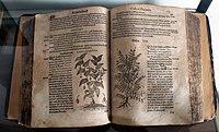Castore durante, herbario novo, francoforte 1609.jpg