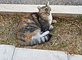 Cat, AUB.jpg
