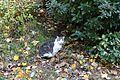 Cat @ Square Carlo Sarrabezolles @ Paris (30782761966).jpg