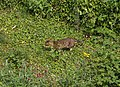 Cat hunting, Torquay - geograph.org.uk - 1870561.jpg