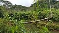 Chanchamayo Province, Peru - panoramio (1).jpg