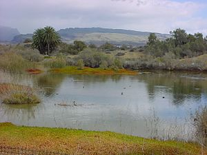 Maspalomas - The nature reserve Charca de Maspalomas