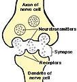 Chem. Synapse scheme.jpg
