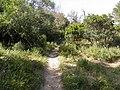 Chemin (Bormes-les-Mimosas) (2).jpg