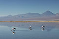 Chile - Salar de Atacama - Licancabur.jpg