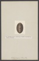 Chiton - Print - Iconographia Zoologica - Special Collections University of Amsterdam - UBAINV0274 005 04 0011.tif