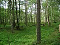 Chojnice, Poland - panoramio (37).jpg