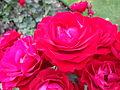 Christchurch Botanic Gardens 10.JPG