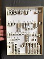 Chrysomelidae collection, Natural History Museum, London 198.jpg