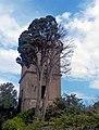 Cipresso e Torre Colombaia a Villa Chigi Versaglia.jpg