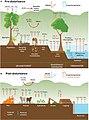 Climate change disturbances of rainforests infographic.jpg