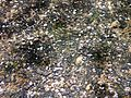 Closeup Crabtree Creek Umstead SP NC 5717 (4780646368) (2).jpg