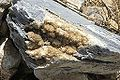 Cluster of crystals in the stone, Ammomaxis mountains, Naxos, 115064x.jpg