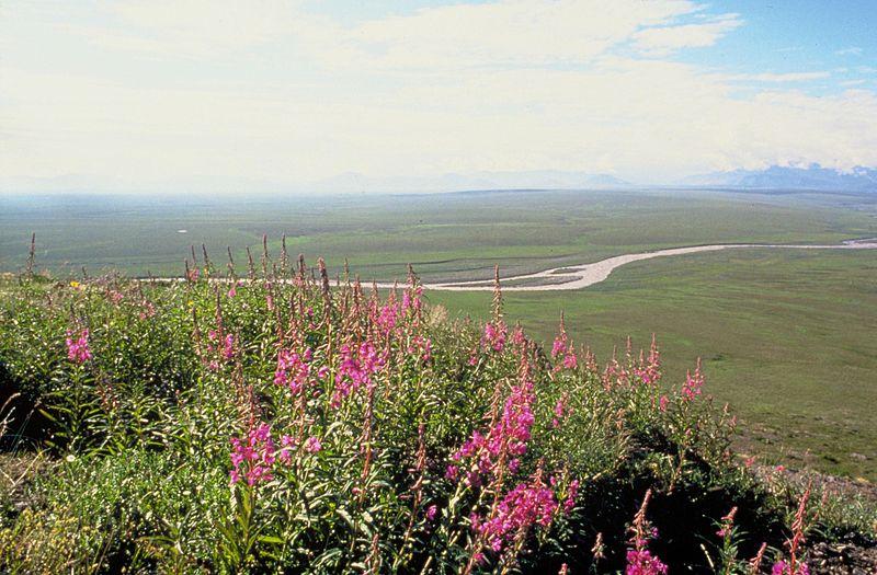 File:Coastal plain Arctic national wildlife refuge.jpg