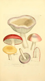Coloured Figures of English Fungi or Mushrooms - t. 201.png