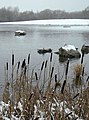 Colwick Country Park in the snow - geograph.org.uk - 1166285.jpg