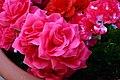 Convincing fake pink roses.jpg