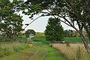 Cornfield Monmouth