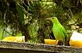 Costa Rica 2.DSCN3321-new (30986657412).jpg