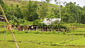 Country side on the way to Khe Sanh (15872836353).jpg