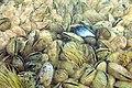 Cozze-anemoni.jpg