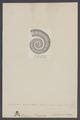 Crioceras - Print - Iconographia Zoologica - Special Collections University of Amsterdam - UBAINV0274 005 10 0027.tif