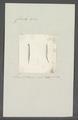 Criseis gadus - - Print - Iconographia Zoologica - Special Collections University of Amsterdam - UBAINV0274 080 07 0027.tif