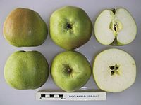 Cross section of Eady's Magnum, National Fruit Collection (acc. 1924-016).jpg