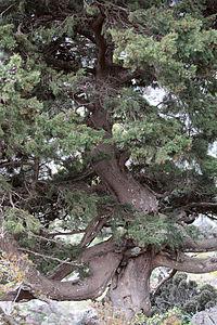 Cypress2(js).jpg