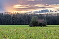 Dülmen, Börnste, Schuppen in einem Feld -- 2021 -- 4392-6.jpg